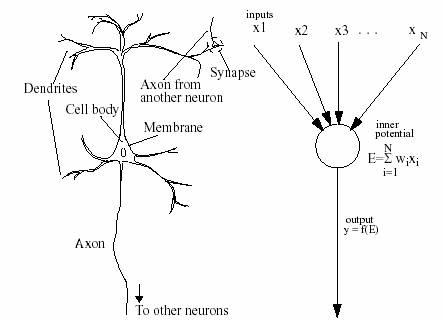 Using neural network to retrieve lexical data a biological neuron a general artificial neuron ccuart Gallery